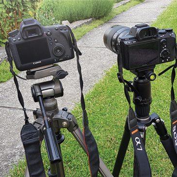 Sony A7 III vs Canon EOS 6D